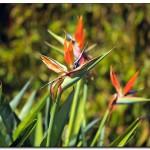 cactus algar spain 37 150x150 Водопады Испании Альгара и Ботанический сад «Кактусы Альгара»