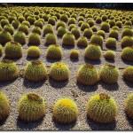 cactus algar spain 39 150x150 Водопады Испании Альгара и Ботанический сад «Кактусы Альгара»