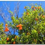 cactus algar spain 4 150x150 Водопады Испании Альгара и Ботанический сад «Кактусы Альгара»