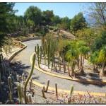 cactus algar spain 40 150x150 Водопады Испании Альгара и Ботанический сад «Кактусы Альгара»