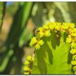 cactus algar spain 41 150x150 Водопады Испании Альгара и Ботанический сад «Кактусы Альгара»