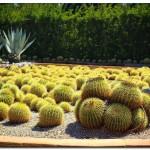 cactus algar spain 43 150x150 Водопады Испании Альгара и Ботанический сад «Кактусы Альгара»