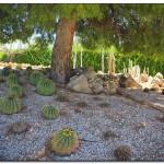 cactus algar spain 44 150x150 Водопады Испании Альгара и Ботанический сад «Кактусы Альгара»