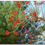 cactus algar spain 45 150x150 Водопады Испании Альгара и Ботанический сад «Кактусы Альгара»