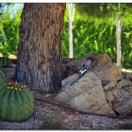 cactus algar spain 5 150x150 Водопады Испании Альгара и Ботанический сад «Кактусы Альгара»
