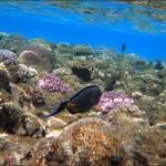 egypet red sea 2019 150x150 Египет, Красное море