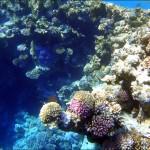 egypet red sea 2022 150x150 Египет, Красное море