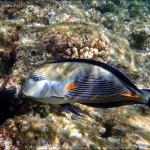 egypet red sea 2024 150x150 Египет, Красное море