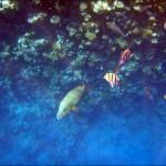 egypet red sea 2026 150x150 Египет, Красное море