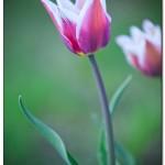 foto flower spring1 150x150 Качественные фотографии весенних цветов