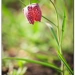 foto flower spring2 150x150 Качественные фотографии весенних цветов