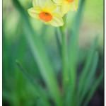 foto flower spring3 150x150 Качественные фотографии весенних цветов