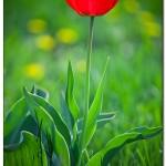 foto flower spring6 150x150 Качественные фотографии весенних цветов