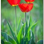 foto flower spring7 150x150 Качественные фотографии весенних цветов