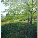 foto flower spring8 150x150 Качественные фотографии весенних цветов