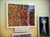 img 7628 165x122 В Липецке открылся фестиваль природной фотографии и 4 выставки