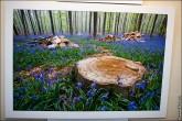 img 7654 165x110 В Липецке открылся фестиваль природной фотографии и 4 выставки