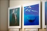 img 7726 165x110 В Липецке открылся фестиваль природной фотографии и 4 выставки