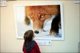 img 77491 165x110 В Липецке открылся фестиваль природной фотографии и 4 выставки