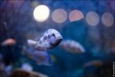 oceanarium voronezh foto 2000 165x110 Океанариум в Воронеже, Сити Парк Град фото