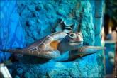 oceanarium voronezh foto 2001 165x110 Океанариум в Воронеже, Сити Парк Град фото