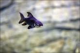 oceanarium voronezh foto 2012 165x110 Океанариум в Воронеже, Сити Парк Град фото