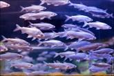 oceanarium voronezh foto 2020 165x110 Океанариум в Воронеже, Сити Парк Град фото