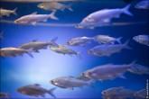 oceanarium voronezh foto 2022 165x110 Океанариум в Воронеже, Сити Парк Град фото