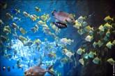 oceanarium voronezh foto 2038 165x110 Океанариум в Воронеже, Сити Парк Град фото
