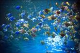 oceanarium voronezh foto 2039 165x110 Океанариум в Воронеже, Сити Парк Град фото