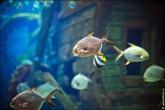oceanarium voronezh foto 2041 165x110 Океанариум в Воронеже, Сити Парк Град фото