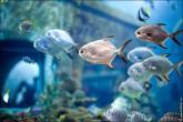 oceanarium voronezh foto 2043 165x110 Океанариум в Воронеже, Сити Парк Град фото