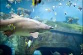 oceanarium voronezh foto 2044 165x110 Океанариум в Воронеже, Сити Парк Град фото