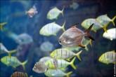 oceanarium voronezh foto 2045 165x110 Океанариум в Воронеже, Сити Парк Град фото