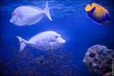 oceanarium voronezh foto 2047 165x110 Океанариум в Воронеже, Сити Парк Град фото