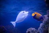 oceanarium voronezh foto 2048 165x110 Океанариум в Воронеже, Сити Парк Град фото