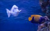 oceanarium voronezh foto 2049 165x105 Океанариум в Воронеже, Сити Парк Град фото