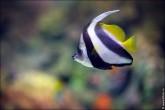 oceanarium voronezh foto 2052 165x110 Океанариум в Воронеже, Сити Парк Град фото