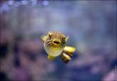 oceanarium voronezh foto 2053 165x115 Океанариум в Воронеже, Сити Парк Град фото