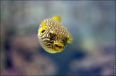 oceanarium voronezh foto 2054 165x108 Океанариум в Воронеже, Сити Парк Град фото