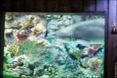 oceanarium voronezh foto 2055 165x110 Океанариум в Воронеже, Сити Парк Град фото