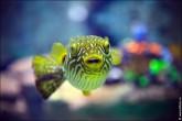 oceanarium voronezh foto 2062 165x110 Океанариум в Воронеже, Сити Парк Град фото