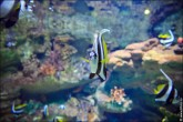 oceanarium voronezh foto 2064 165x110 Океанариум в Воронеже, Сити Парк Град фото