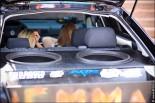 photo motorshow 2018 155x103 Выставка автозвука и автотюнинга   Моторшоу 2012