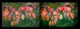 pic 165x61 Фото мастерская, было   стало, примеры фотографий
