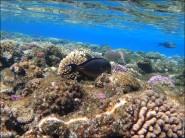 sony DSC TX10 foto 2008 185x138 Подводный фотоаппарат Sony Cyber shot DSC TX10 снимаем под водой!