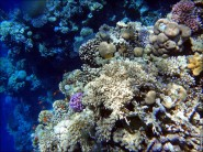 sony DSC TX10 foto 2010 185x138 Подводный фотоаппарат Sony Cyber shot DSC TX10 снимаем под водой!