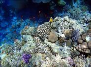 sony DSC TX10 foto 2011 185x138 Подводный фотоаппарат Sony Cyber shot DSC TX10 снимаем под водой!