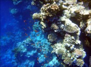 sony DSC TX10 foto 2013 185x138 Подводный фотоаппарат Sony Cyber shot DSC TX10 снимаем под водой!