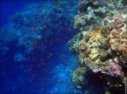 sony DSC TX10 foto 2014 185x138 Подводный фотоаппарат Sony Cyber shot DSC TX10 снимаем под водой!